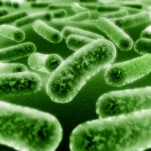 Probiotic-Bacteria-300x299